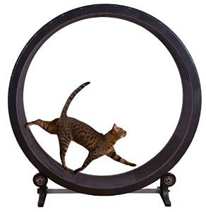 Cat Exercise Wheel – Black