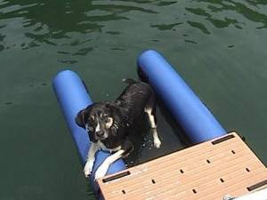 Dog On Water Ramp