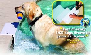 Paws Aboard New Model Pool Dog Pup Ladder Steps