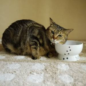 CAT1st Elevated Ceramic Water Bowl