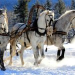 35 Most Beautiful HD Horse Wallpapers