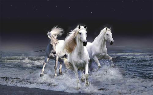 WHITE HORSES Wallpaper design