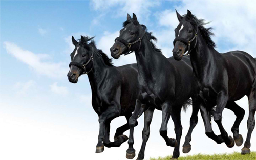 Black Beauty Trio Wallpaper design