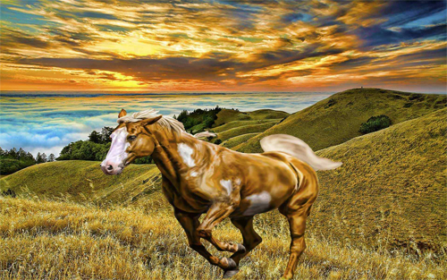 Horse On Mountain Wallpaper design