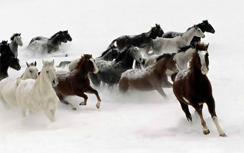 Winter Scaping Horses Wallpaper design