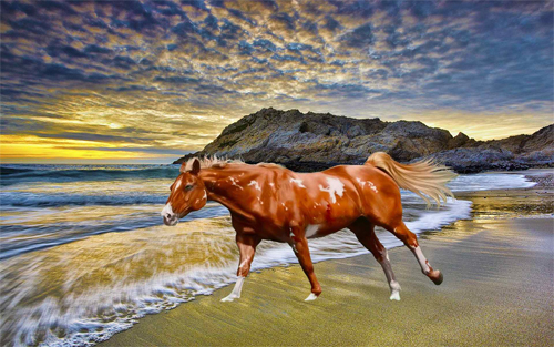 Horse At Beach Wallpaper design