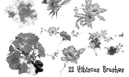 Realistic free hibiscus Flower brushes