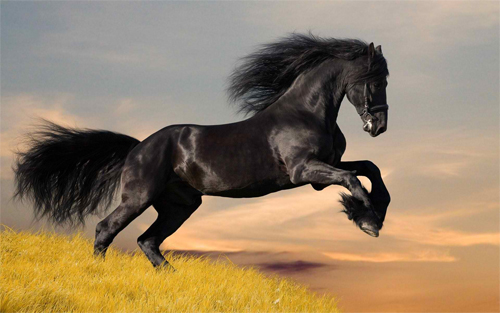 amazing black horse Wallpaper design