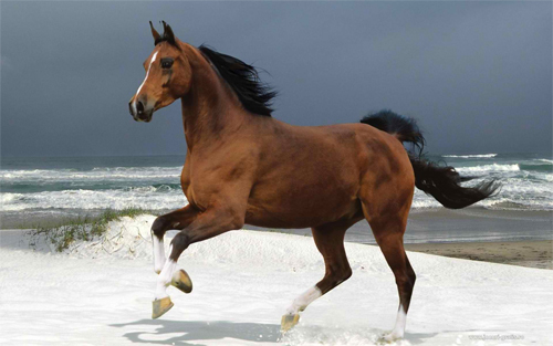 Majestic brown horse Wallpaper design