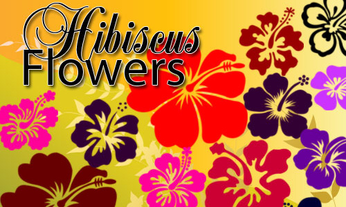 Photoshop free hibiscus Flower brushes