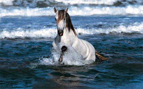 Horse in Water HD Wallpaper design
